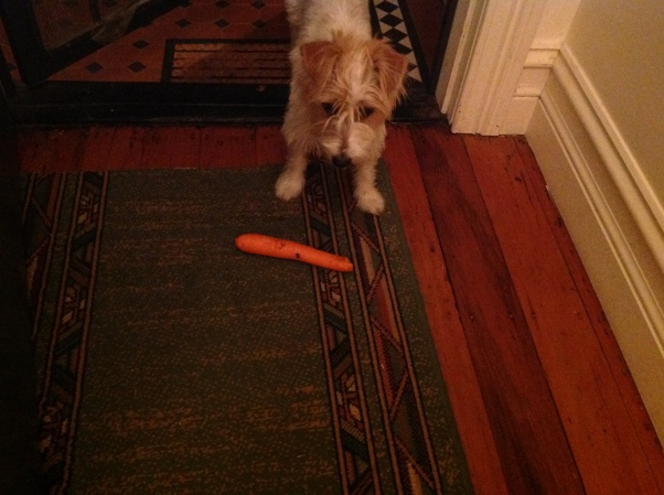 Frankie sharing Red's carrot